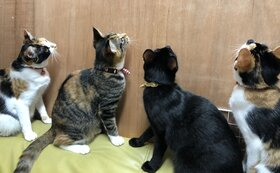お礼のお手紙・ねこグッズ10点セット・『保護猫カフェあんちゃん』新聞