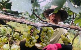プレザンティールのワイン赤/白セット