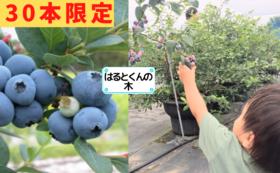 ●追加●農薬不使用のブルーベリーの木を1本まるまる所有できる権利!木の寿命は20年 お子様へのギフトにも!