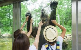 【1万5千円】クマたちにスイカをプレゼントコース|オンラインエサやり体験