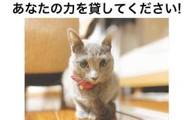 【マナちゃんを応援したい!】-500