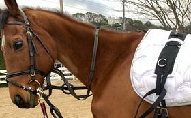[50000円]  引退競走馬にセカンドキャリアを