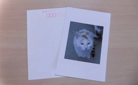 感謝のお手紙とシロチビのポストカード2枚