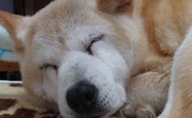 【1万円】全力で応援!コース:老犬たちの幸せな日々をともに作り出す仲間に!