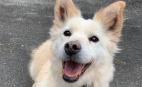 【5万円】ゴールド応援コース:老犬たちの幸せな日々をともに作り出す仲間に!