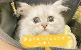 全額応援 5000円コース(リターン不要)