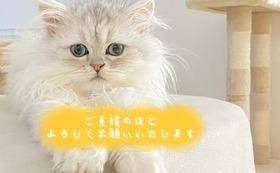 全額応援 10000円コース(リターン不要)