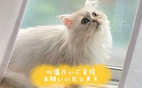 全額応援 100000円コース(リターン不要)
