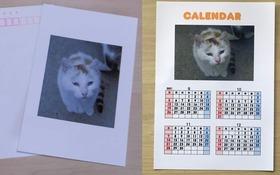 感謝のメールとポストカード4枚カレンダー4枚、画像集