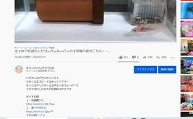 5万円応援コース