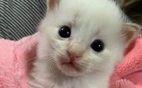 【300000円】お礼のメール・オリジナルグッズセット・店内にネーム掲示・猫カフェフリーパス