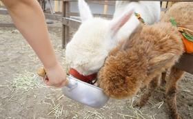 リターン1【気持ちで応援】コーンを牧場の餌に加工する工場に送って廃棄処分から救う!