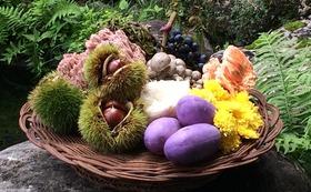 「新・出羽屋の山菜料理」1冊と季節の山の宅配便