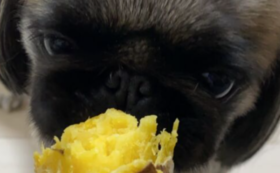 【応援+リターン】40日間寝かせたしっとりあまい安納芋のお届け5キロ