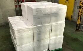 リターン7【業者・店舗向け】ネルソンズコーン 100 KG 廃棄処分を避けるための無利益価格