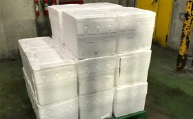 リターン9【業者・店舗向け】ネルソンズコーン 500KG 廃棄処分を避けるための無利益価格