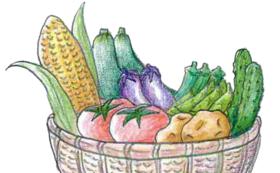 「自然農法で作った加賀の夏野菜セット」コース