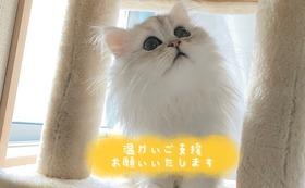 全額応援 20000円コース(リターン不要)