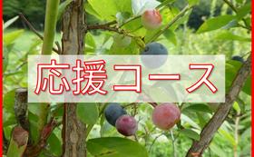 3,000円 応援コース
