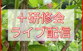50,000円 研修会ライブ配信でリアルタイムに応援コース