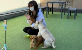 【5万円】ペットと暮らす方向け・オンラインしつけ教室コース