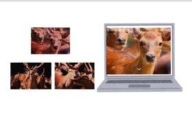 香取の鹿ポストカードセット・ホームページにお名前掲載