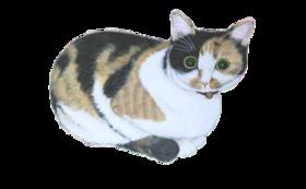 3000円:保護猫応援コース(お礼のメール、保護猫たちの写真、あんちゃん新聞(データ))