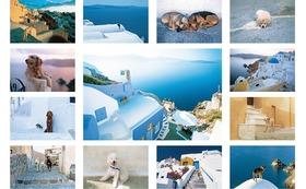 私のオリジナルポストカード(2)13枚 『Aegean Dog』エーゲ海の犬たちです。