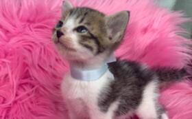 保護した可愛い猫たちの写真付きお手紙コース