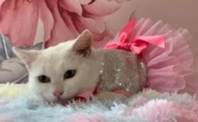 シャディ保護猫ハウスを全力で応援!