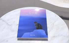 私のギリシャ写真集「心の旅」エーゲ海の島々で幸せに暮らす、猫と犬と風景の写真集です。