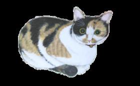 5000円:保護猫応援コース(お礼のメール、保護猫たちの写真、あんちゃん新聞(データ))