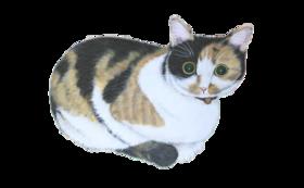 10000円:保護猫応援コース(お礼のメール、保護猫たちの写真、あんちゃん新聞(データ))