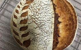 【お勧め】【READY FOR限定】パピーのパン 2種x2個(各200g)(オリジナルトートバッグ付)