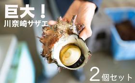 川奈の海女さんが採った川奈崎サザエ2個セット