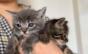 【オンライン合同質問会】保護活動や保護猫カフェの開き方など