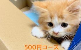 キュル応援500円