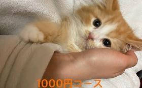 キュル応援1000円