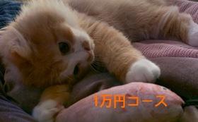 キュル応援1万円