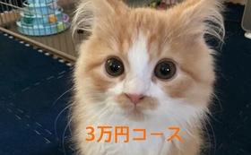 キュル応援3万円(リターン不要の方はこちら)