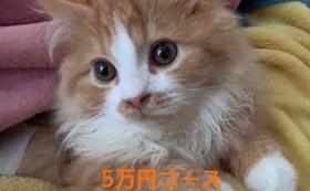 キュル応援5万円(リターン不要の方はこちら)