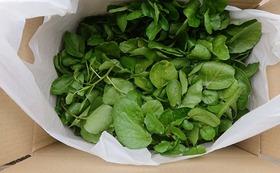 (農園に来られない方)年間2回のカラダが喜ぶ野菜やハーブティーのお届け+活動報告