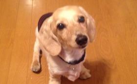 【介護を必要とする犬の4輪歩行器】 感謝のお手紙・活動報告レポート。