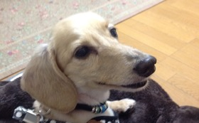 【介護を必要とする犬の4輪歩行器】 感謝のお手紙・活動報告レポート・4輪歩行器購入割引チケット