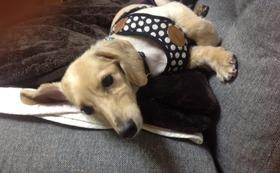 【介護を必要とする犬の4輪歩行器】 感謝のお手紙・活動報告レポート・4輪歩行器購入半額チケット