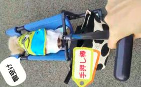 【介護を必要とする犬の4輪歩行器】 感謝のお手紙・活動報告レポート・4輪歩行器購入チケット