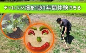 チャレンジ畑を1畝1年間体験できる権利!