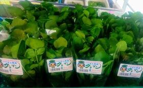 (農園に来られない方)年間10回の<カラダが喜ぶ野菜>豪華旬の野菜の詰め合わせ+ハーブティー、加工品セット₊活動報告