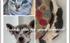アニプロケアハウスから「感謝のカード」をお送りします。