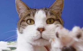 アニプロ2022猫の週めくりカレンダー(A6サイズ)
